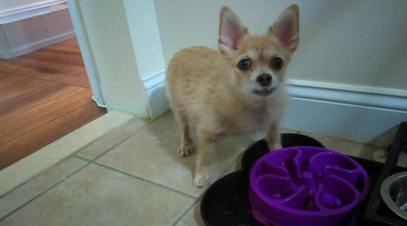 A reviewer's dog with the bowl in purple