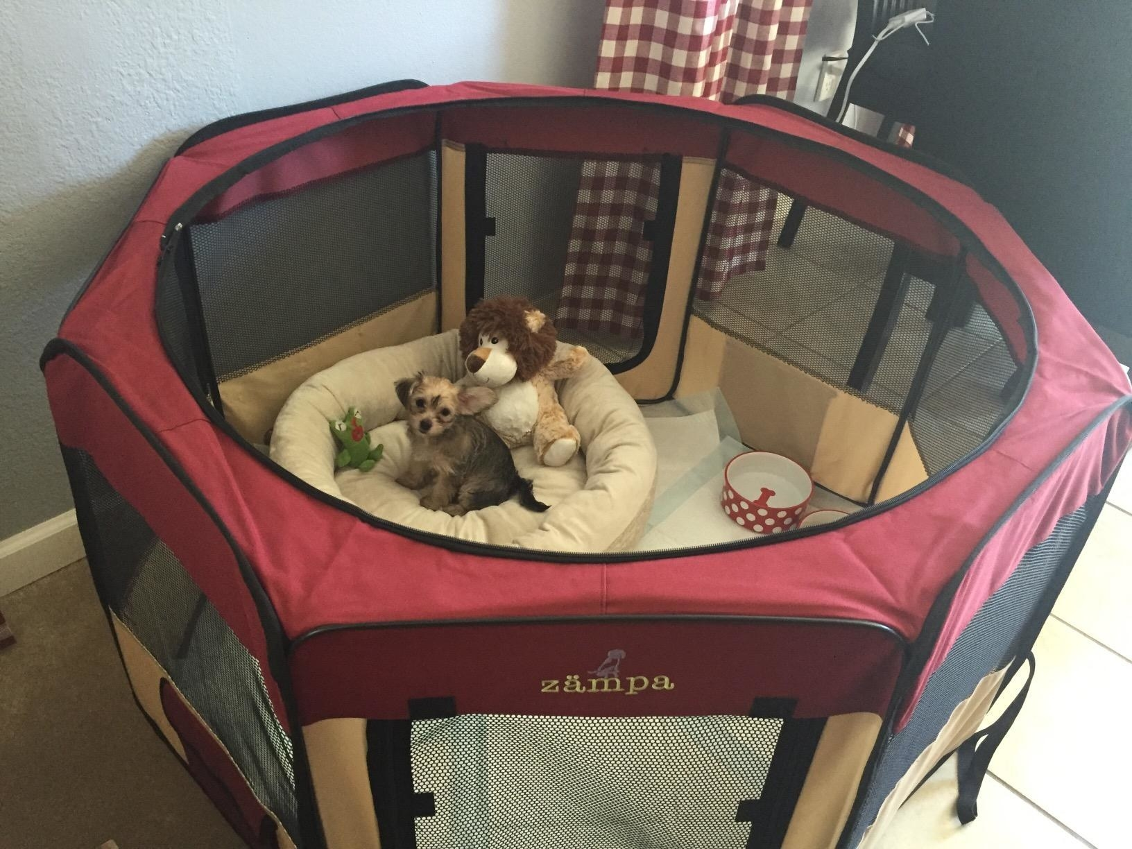 Playpen with mesh sides and inside is a dog bed and pee pads