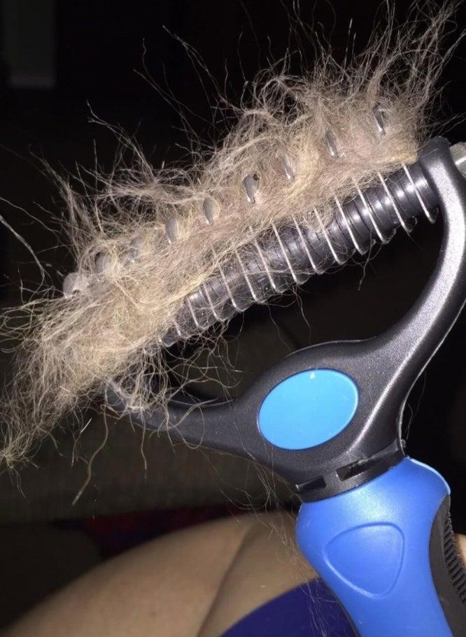 The reviewer's brush full of pet hair