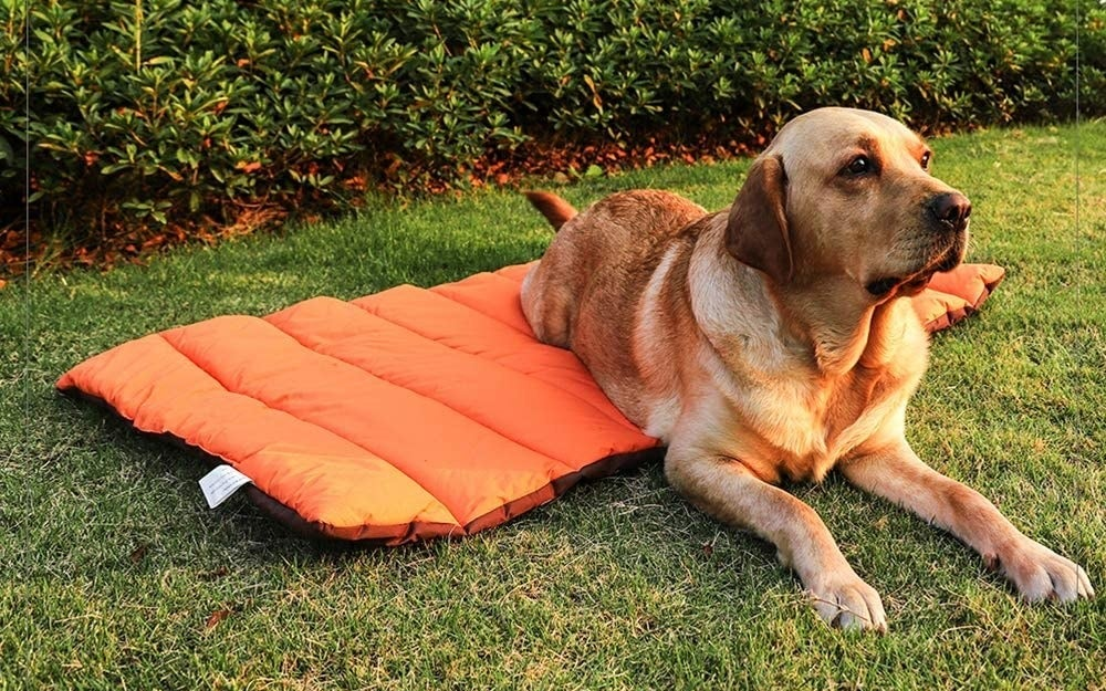 large dog on orange puffy mat in grass