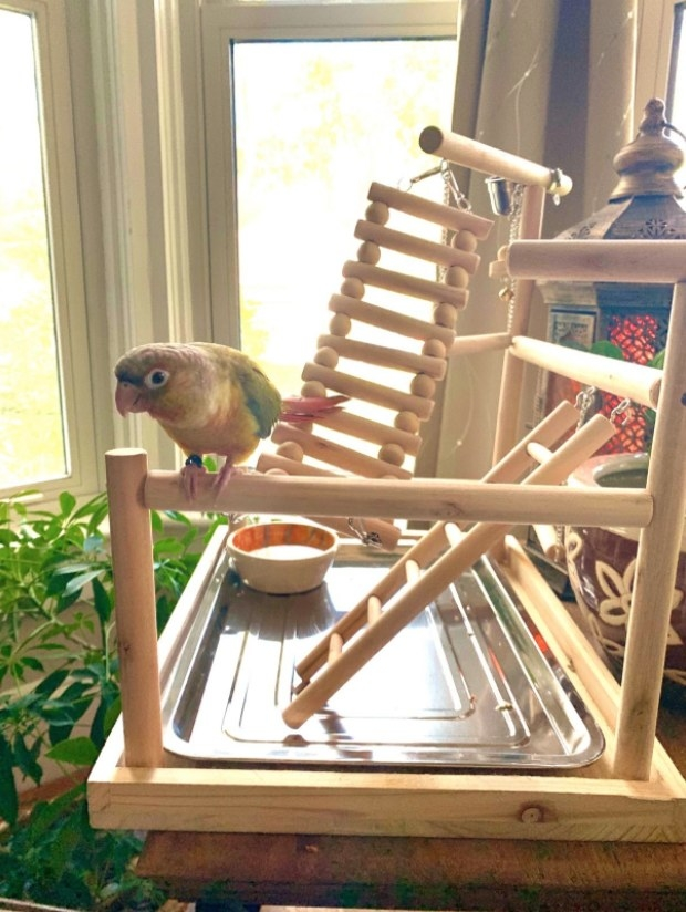 A colorful parrot sits on a wooden perch next to a small ladder.