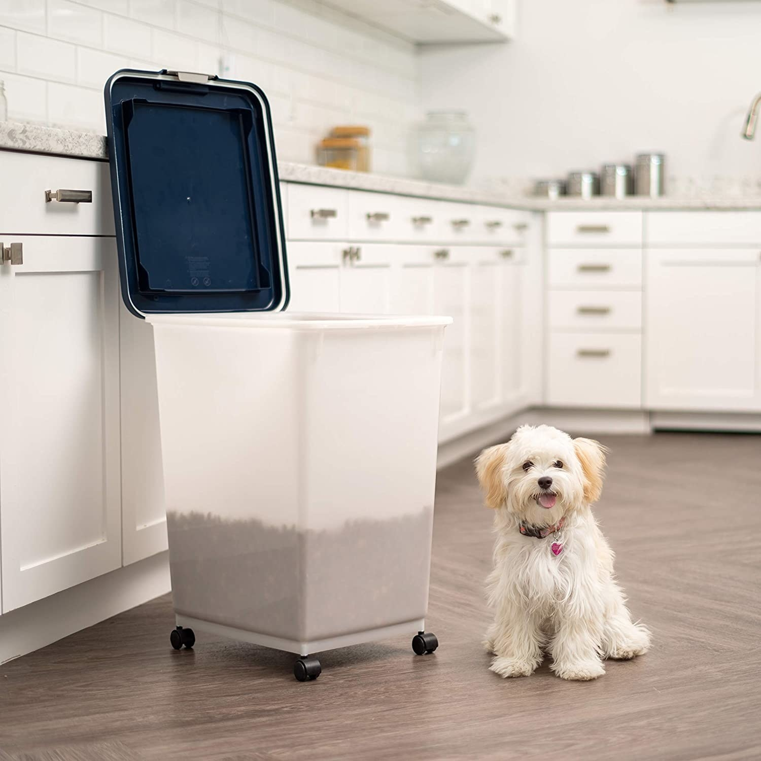 small dog next to large rolling bin with lid
