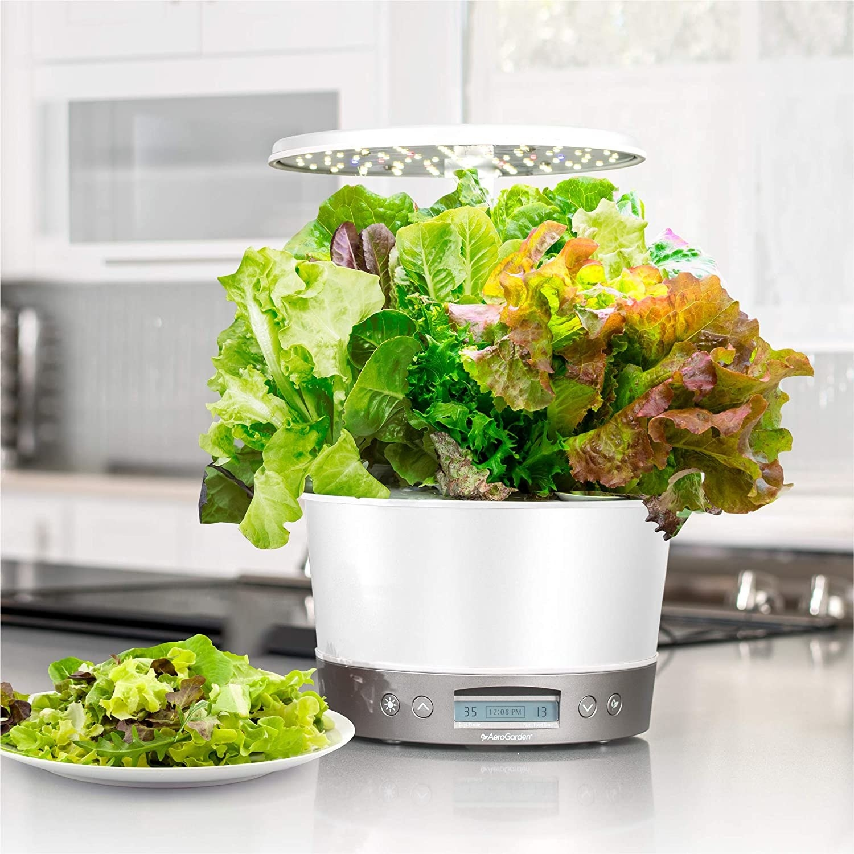 An Aerogarden with lettuce on a kitchen countertop