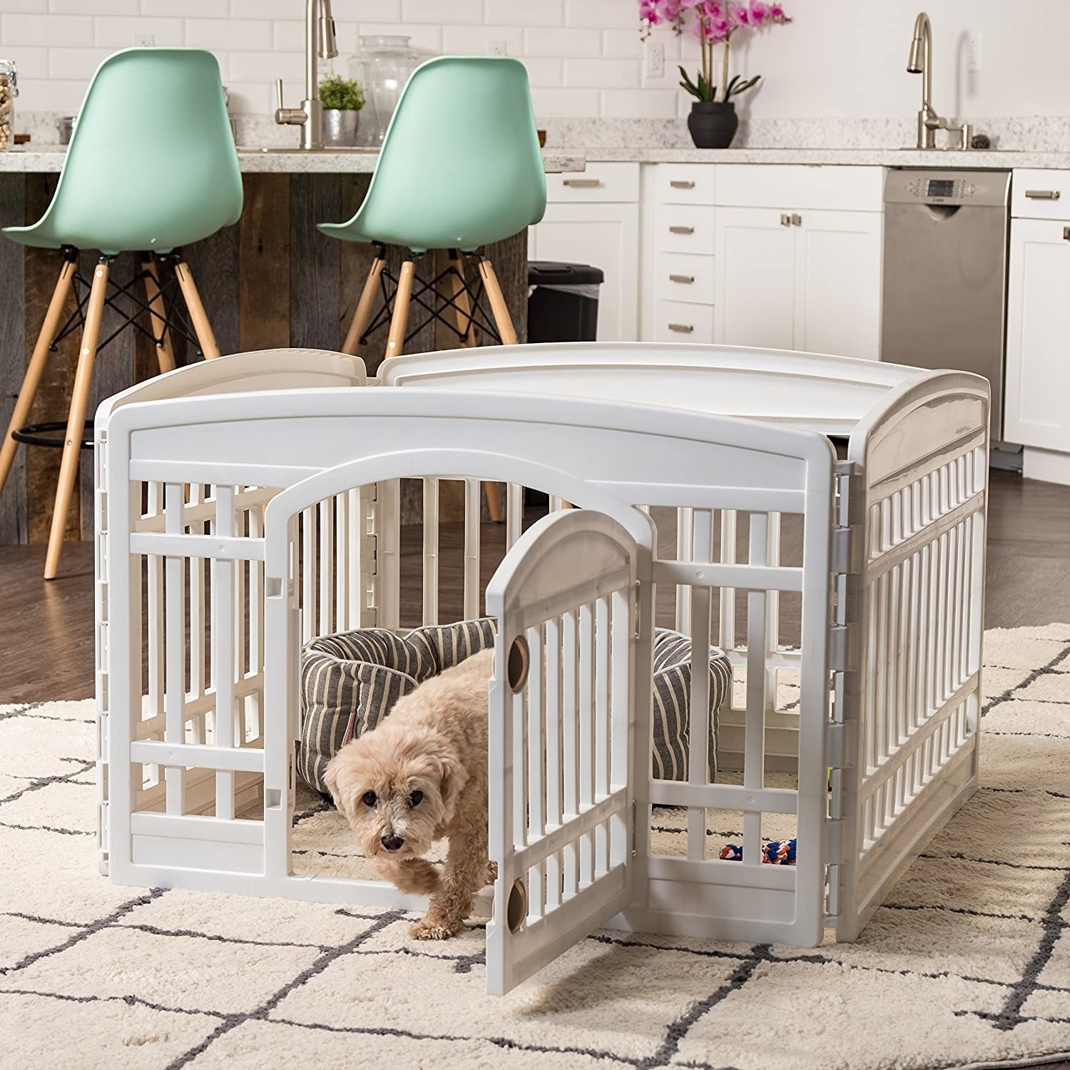 small dog in white fenced in play zone