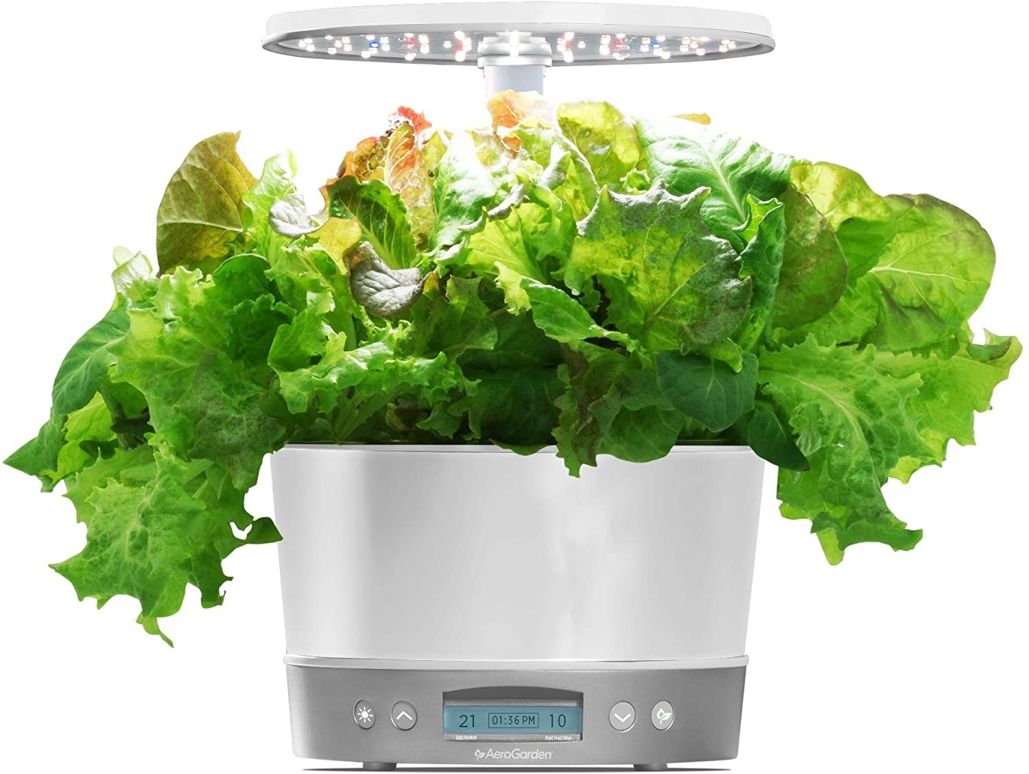 The Aerogarden filled with lettuce