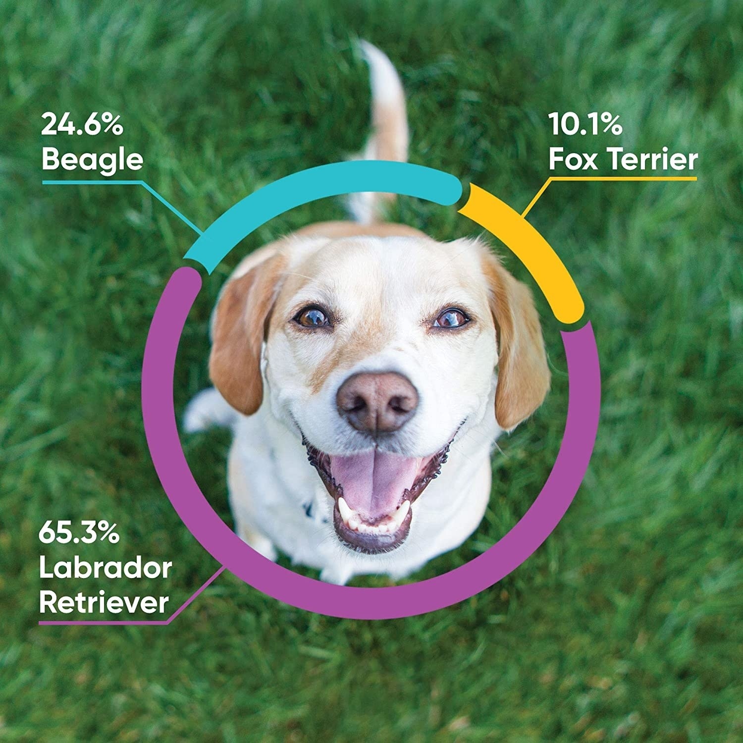 An example breakdown of breeds: 24.6% beagle, 10.1% fox terrier, and 65.3% labrador retriever