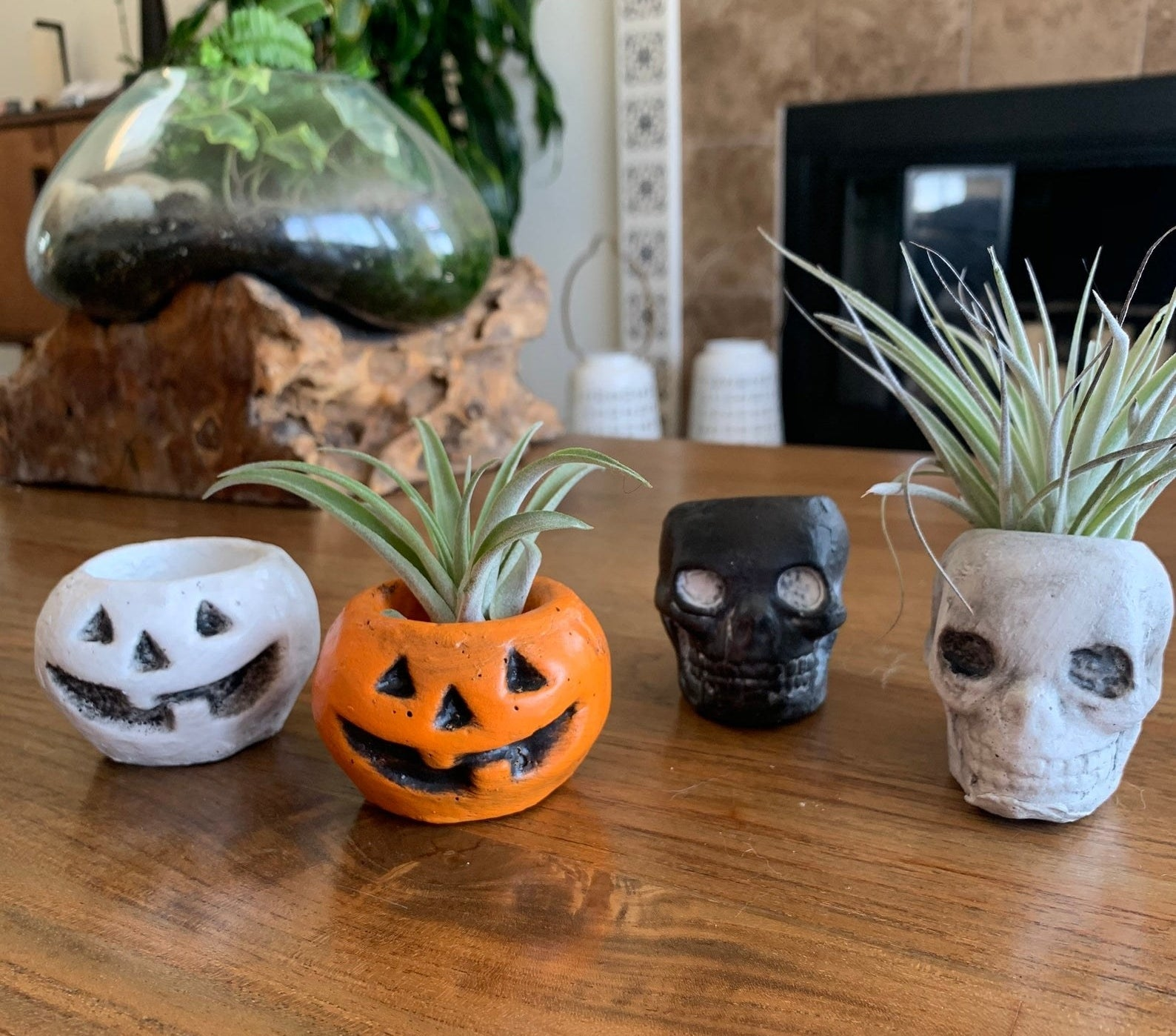 All four pot options — black and white jack-o'-lanterns and black and white skulls — with two air plants