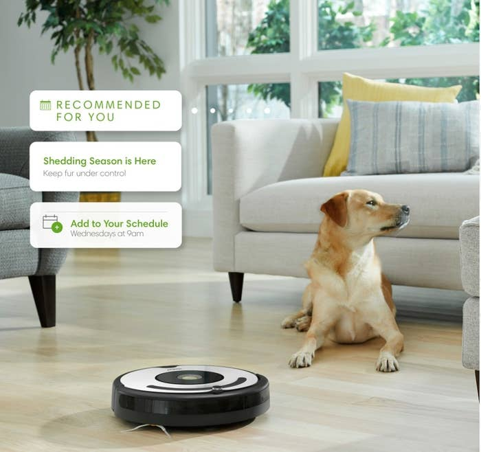 White and black round roomba on wooden living room floor next to dog
