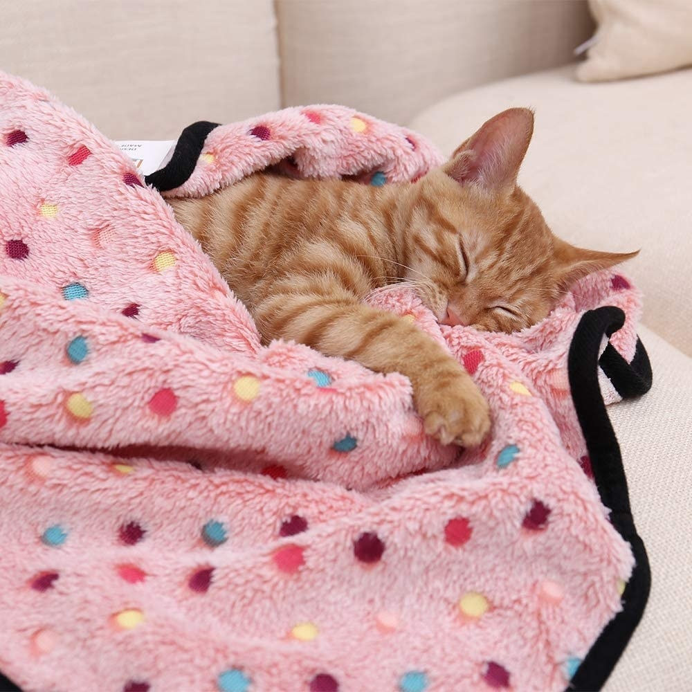 Cat snuggled in the pink polka-dot blanket