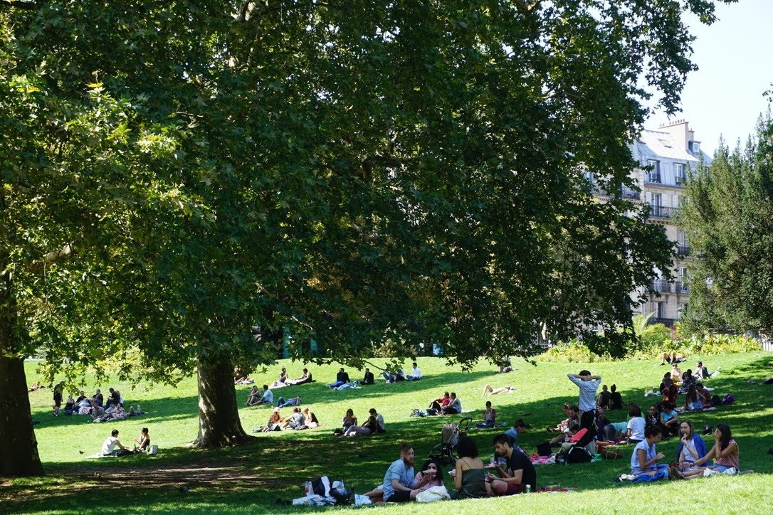 Groups of people gather in a green park for a picnic