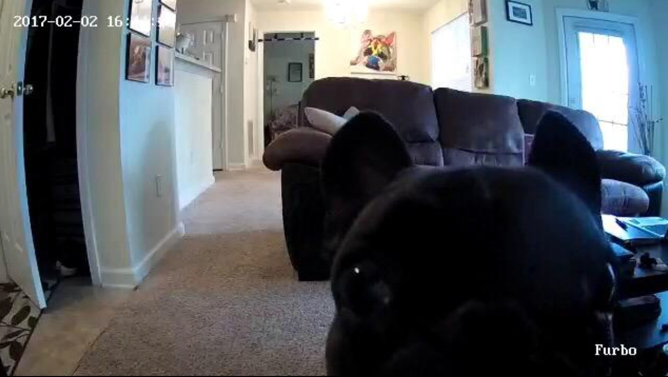 A reviewer's image of their dog in the wifi controlled pet camera