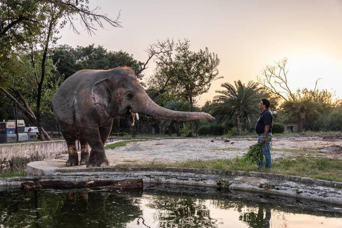 Image of Kaavan the elephant at Marghazar Zoo in Islamabad, Pakistan.