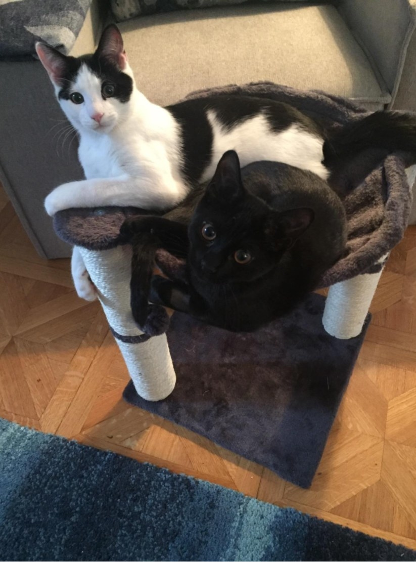 Two cats laying in the hammock bed of the cat condo