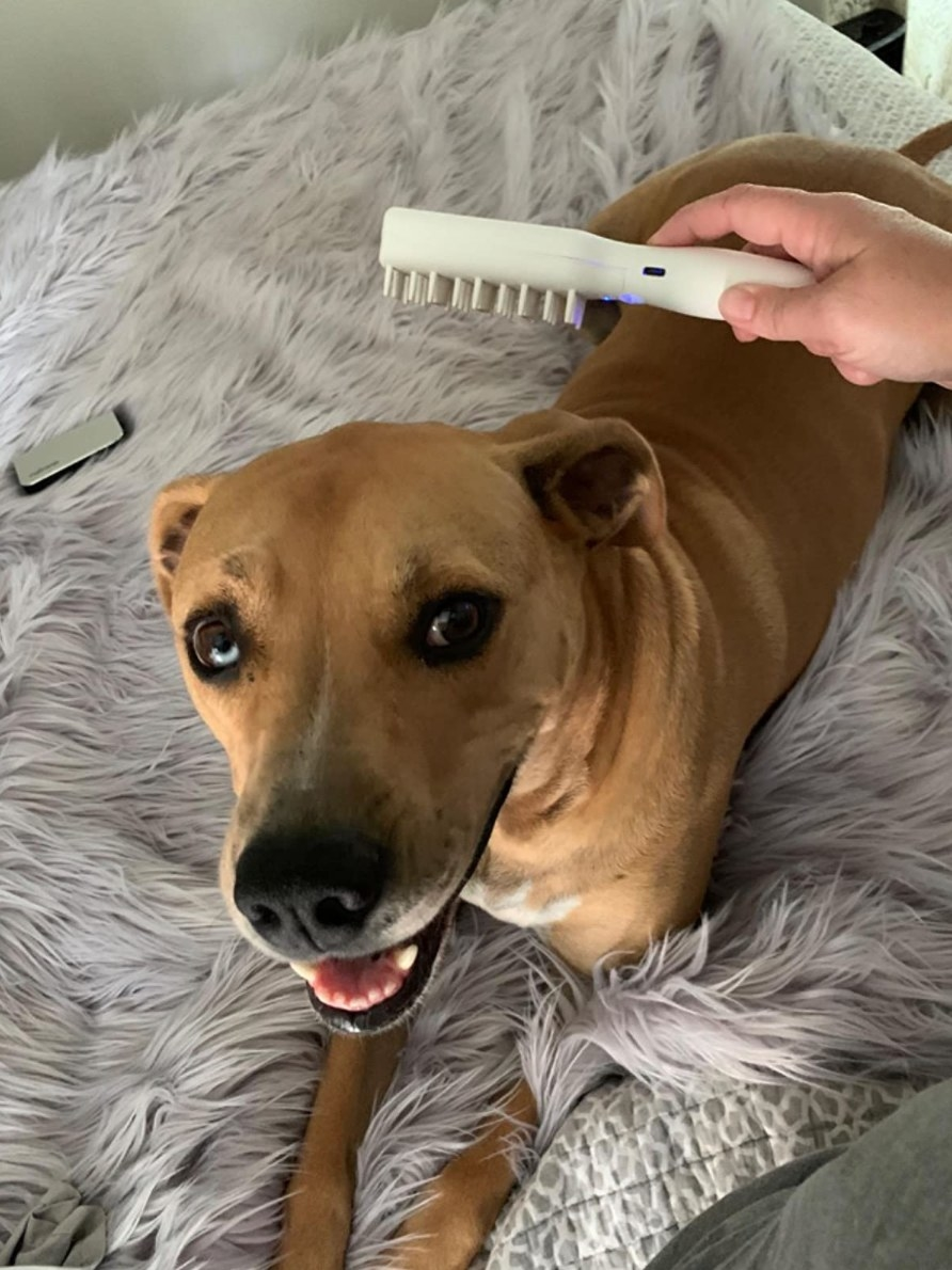 A reviewer's photo of their dog with the white grooming brush