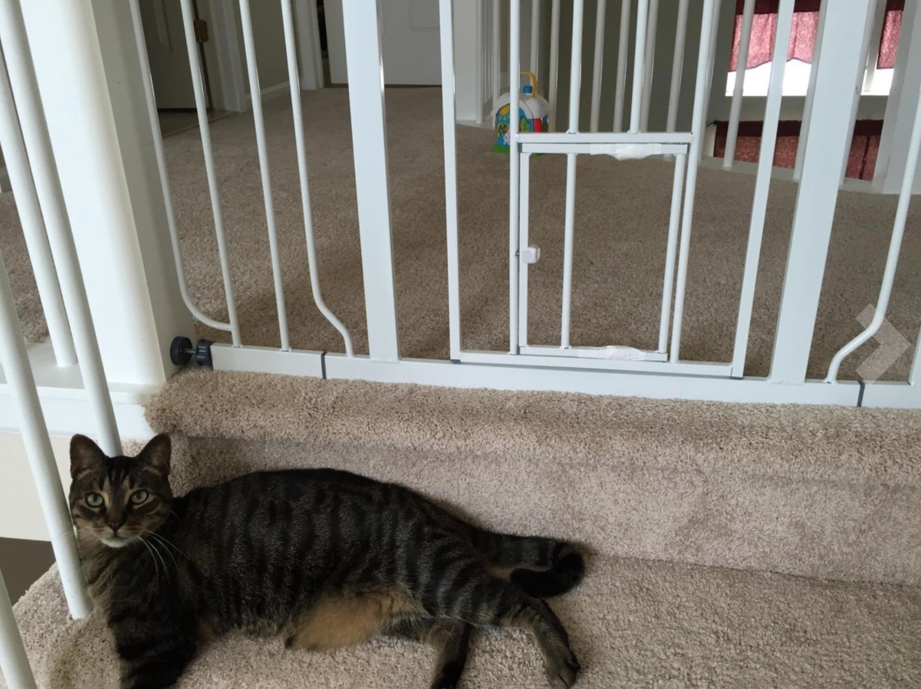 A reviewer's photo of their cat on carpeted stairs outside the small pet gate