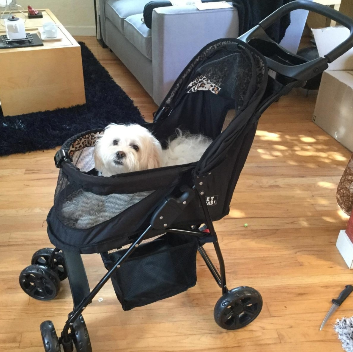 A reviewer's image of their dog in the black stroller