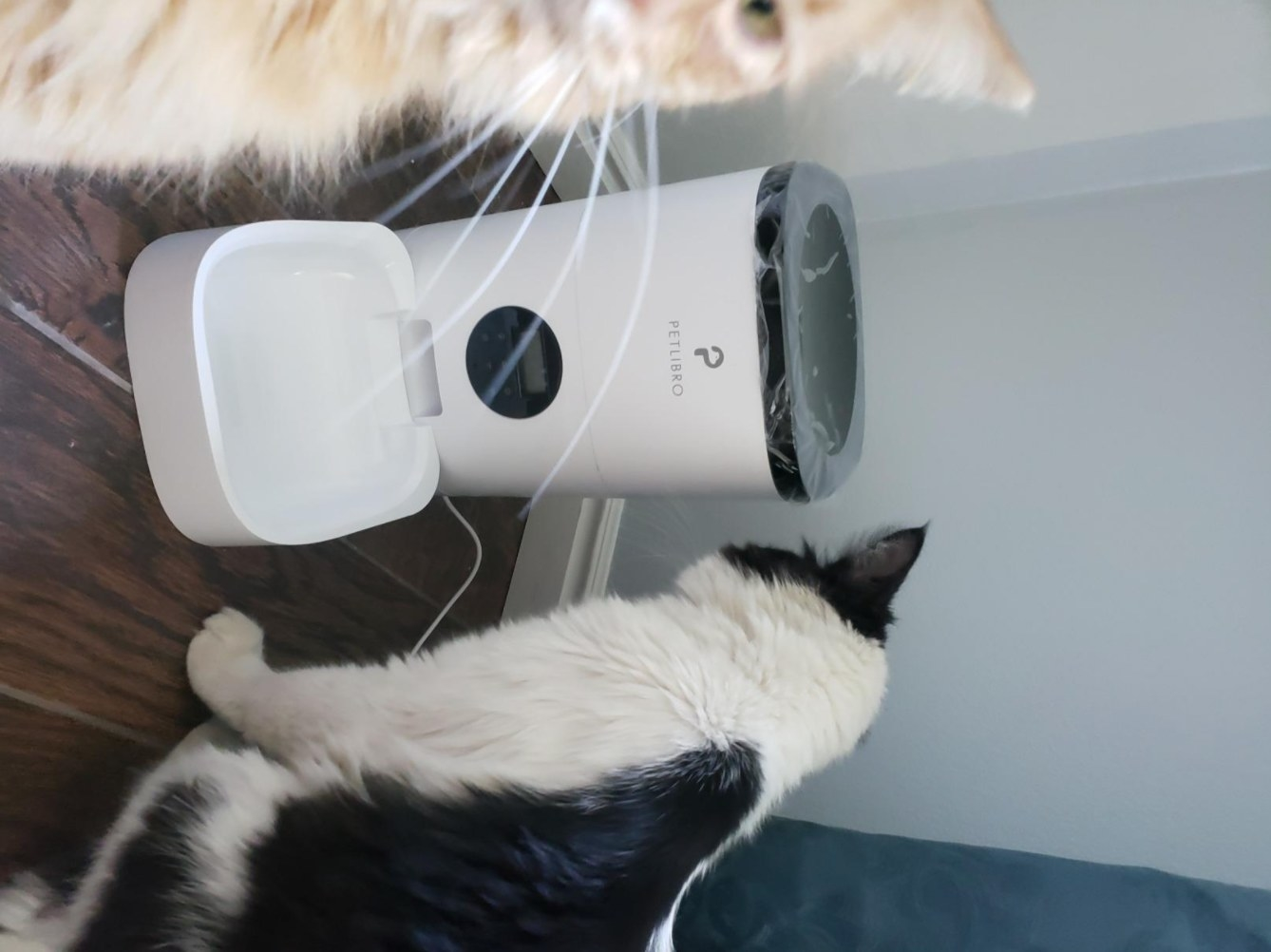 A reviewer's photo of their cats with the automatic pet feeder in white