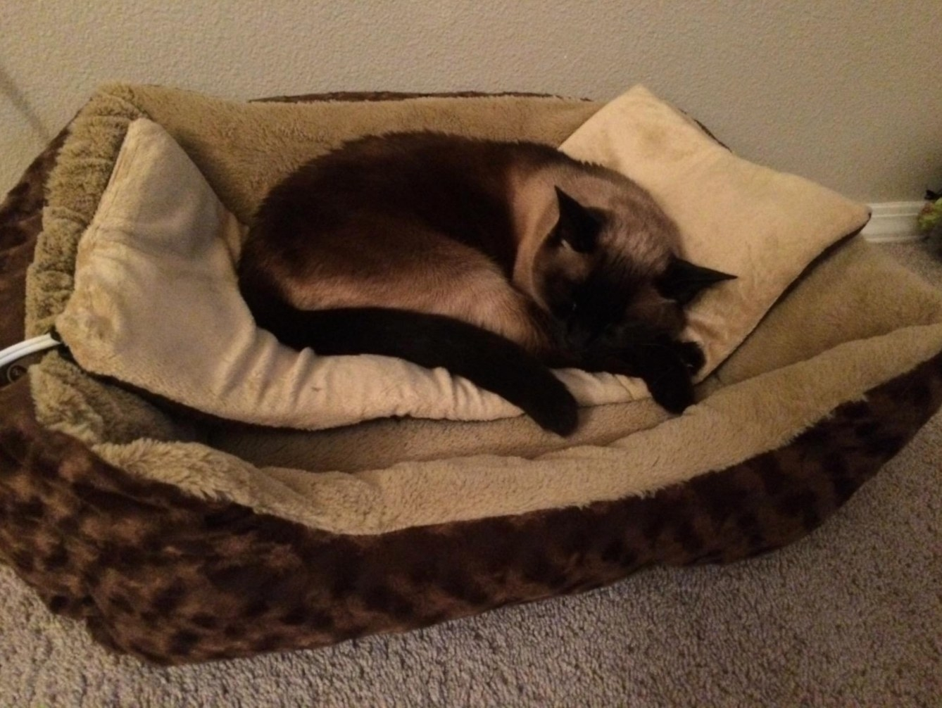 A reviewer's image of their cat on the heated bed