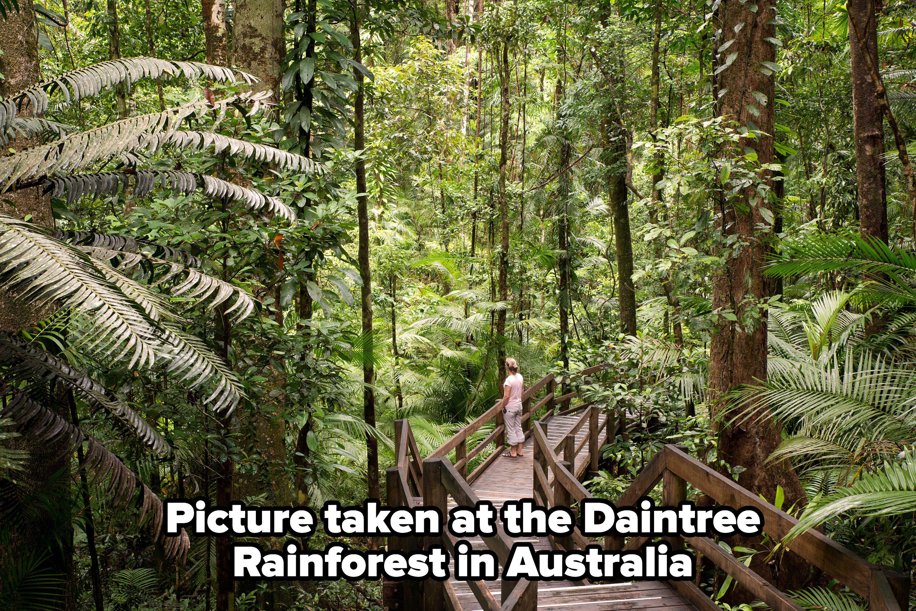 A picture taken at the Daintree Rainforest in Australia