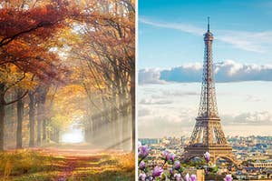 An image of an autumn forest next to an image of the Eiffel Tower