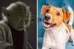 Yoda is on the left with a dog on a sofa on the right