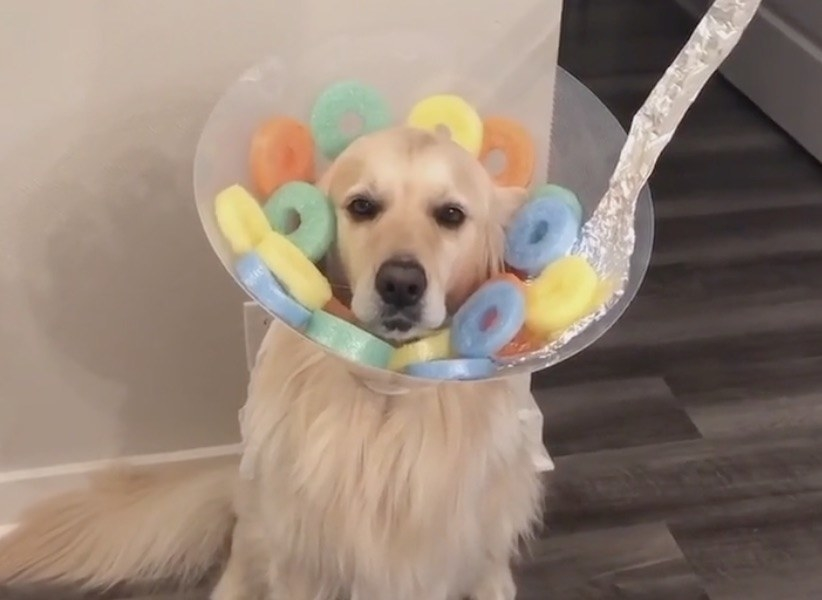A dog wearing a cone on his head that is filled with fake Fruit Loops cereal pieces