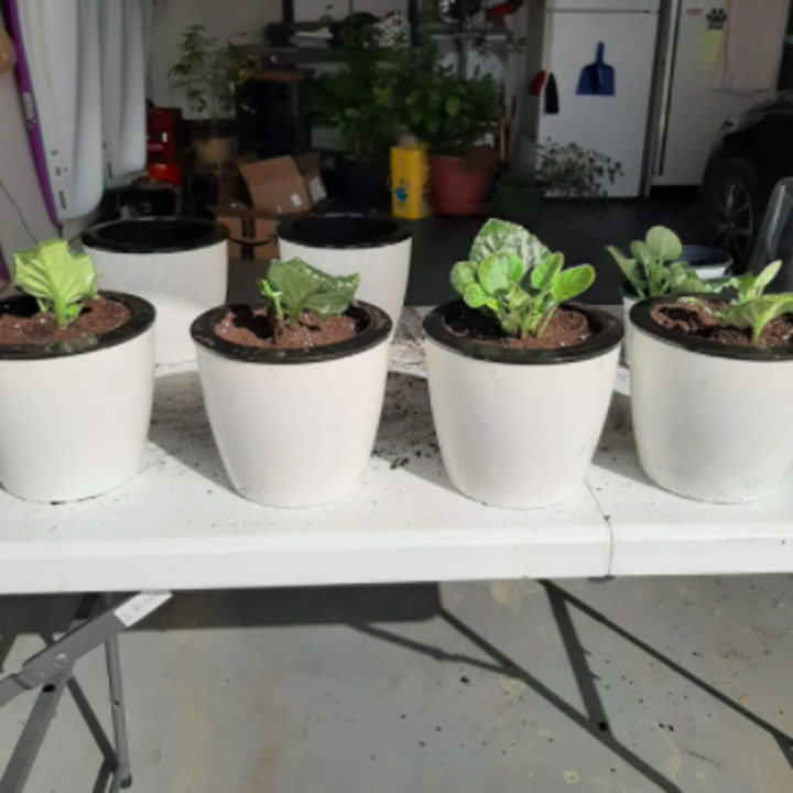 reviewer photo showing four of the planters each filled on a table