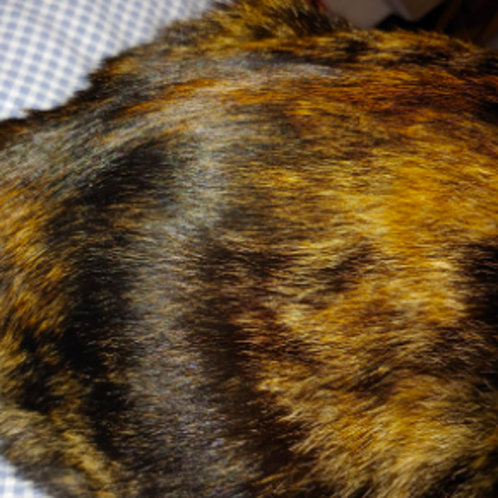 Same cat with clean, shiny coat and no dander