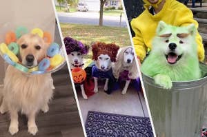 狗作为谷物圈早餐麦片,三只狗作为桑德森姐妹一碗,狗奥斯卡的牢骚