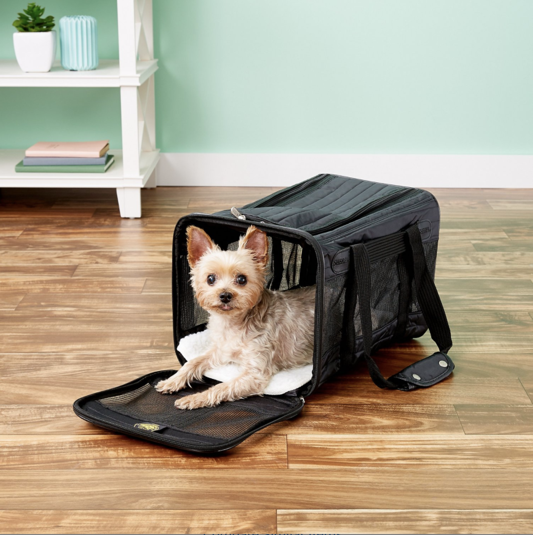 A dog inside the carrier