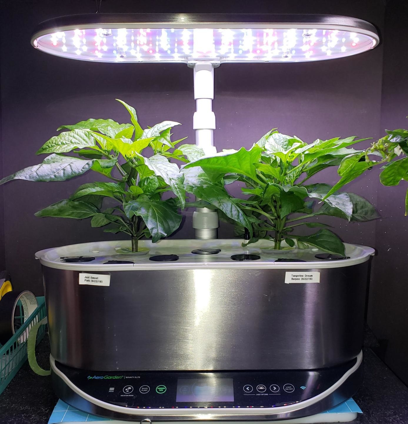 A reviewer's Aerogarden, which is a base with plant pods growing out of it and a light stand over it