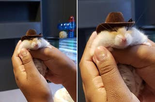 A hamster in a cowboy hat being held