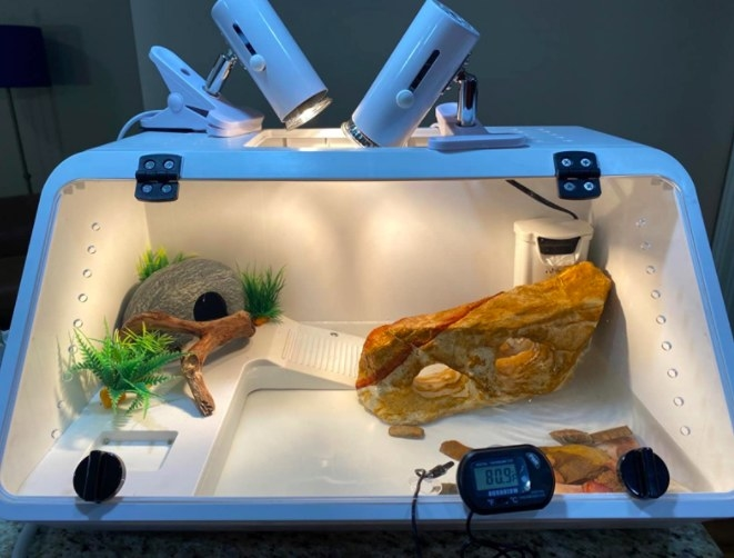 white turtle tank with a lamp and accessories inside