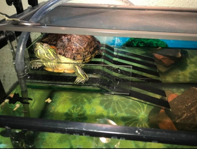 a turtle relaxing at the top of a basking platform that has a ramp