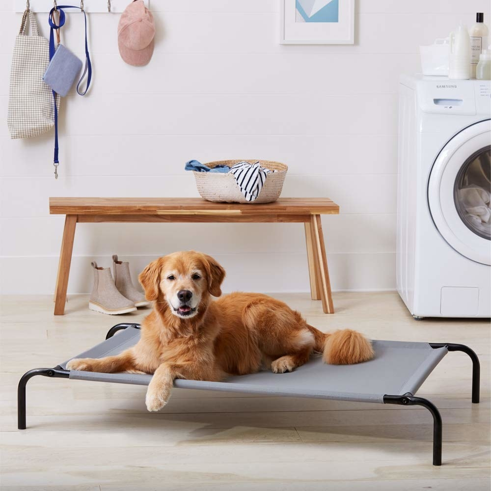 A dog on a cooling mat