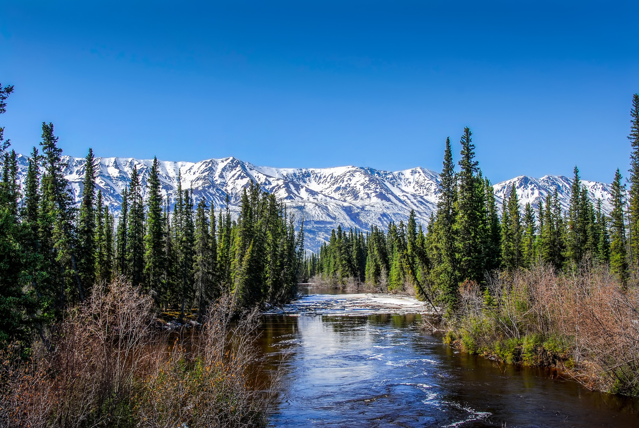 Tall pine trees surround a river with snow-capped mountains in the distance