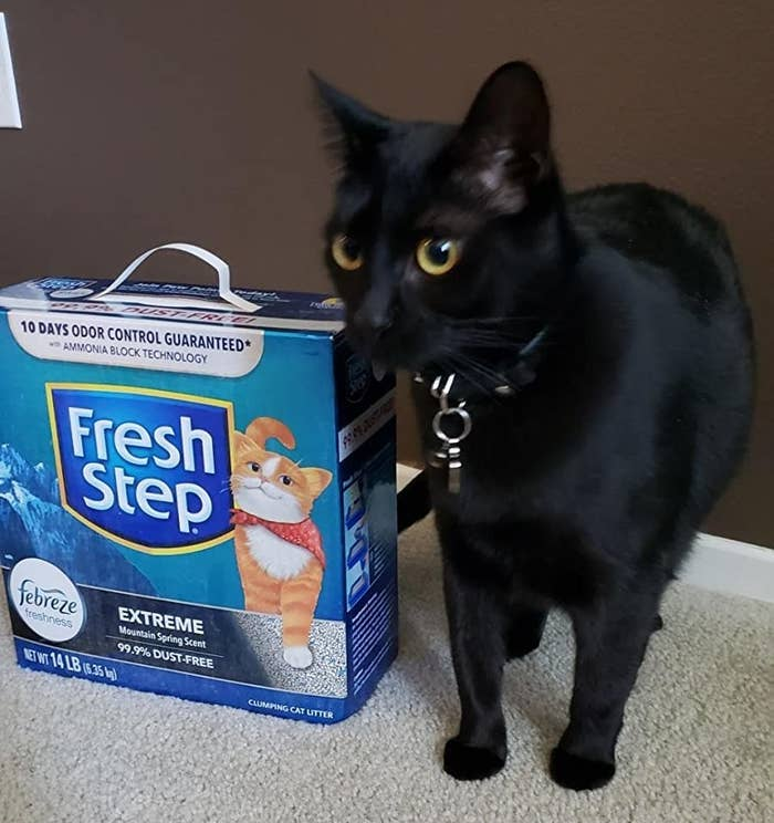 Reviewer image of cat next to product with mountain spring scent