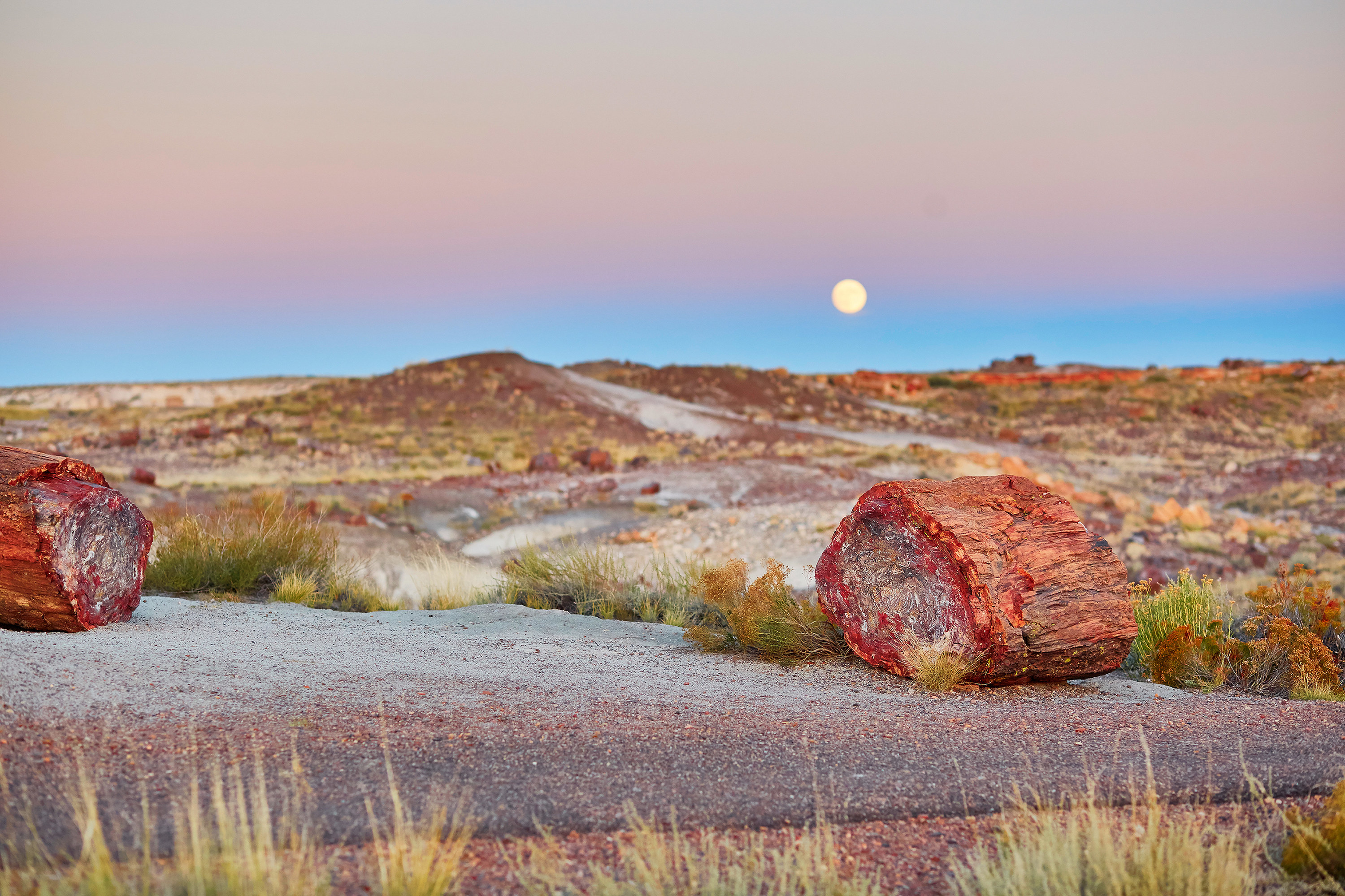 The moon in a twilight sky over a desert landscape dotted with shrubs and two red, petrified wood pieces in the foreground