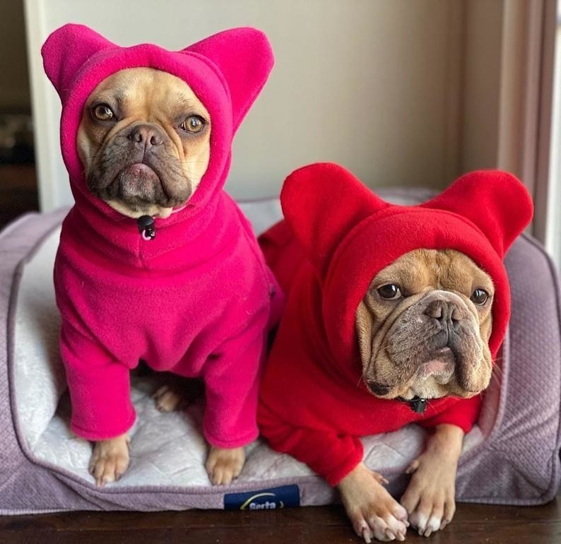 two dogs wearing the pink and red hoodie