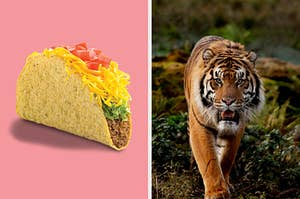On the left, a crunchy beef taco with lettuce, cheese, and tomatoes, and on the right, a tiger walks in the jungle and growls