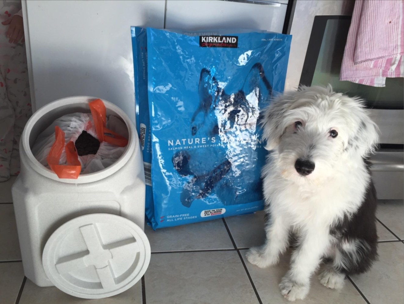 A dog waiting to be fed from the food storage container