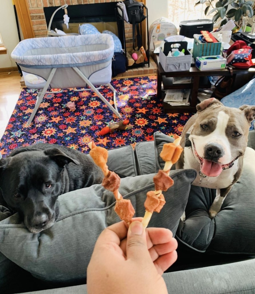 Two dogs stare are two rawhide kabobs a person is holding for them
