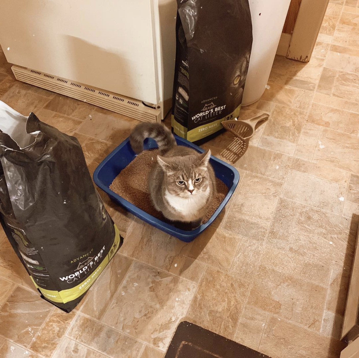 A cat is pooping in a litter box with brand new litter