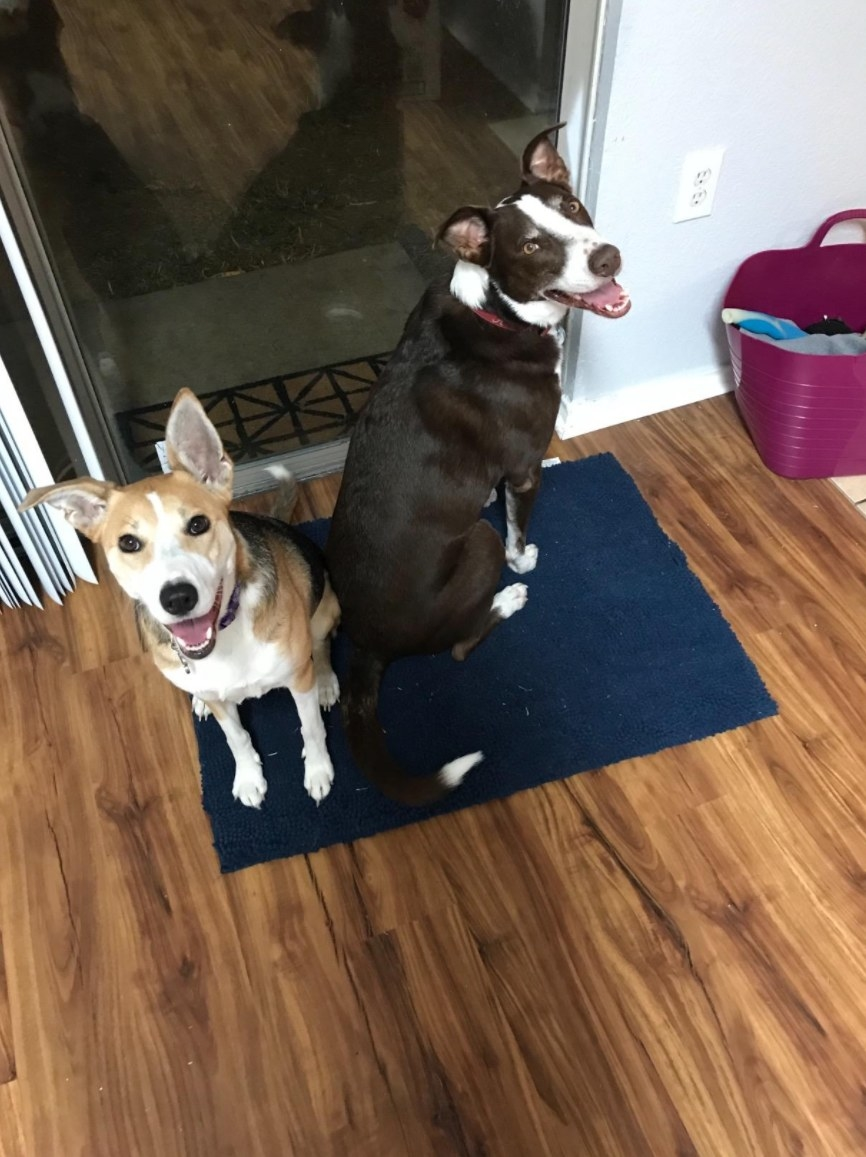 Two dogs happily sitting on the doormat