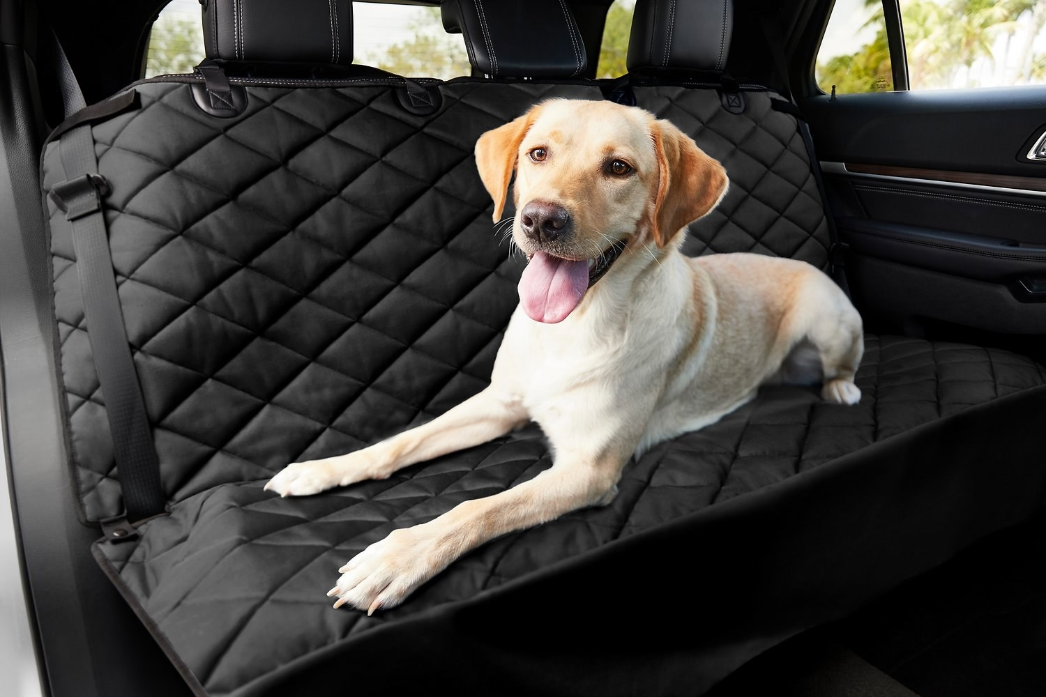 Dog sitting on the bench car seat with the cover