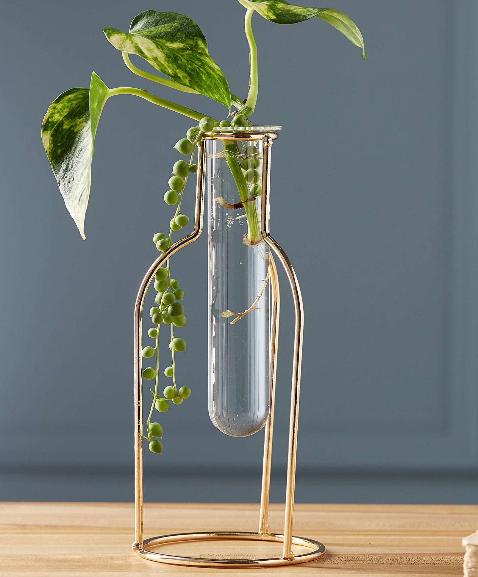 Plant clippings in the vial vase