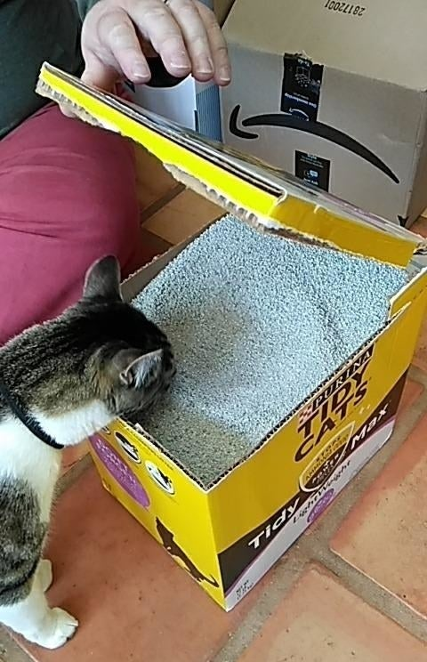 Reviewer image of cat smelling light weight crystals of product