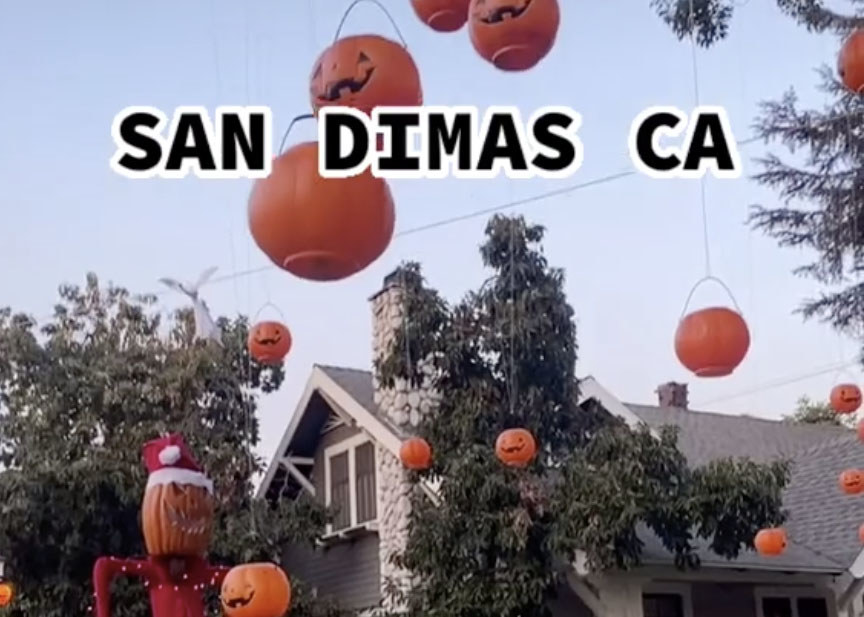 Lots of pumpkins are hung from a tree