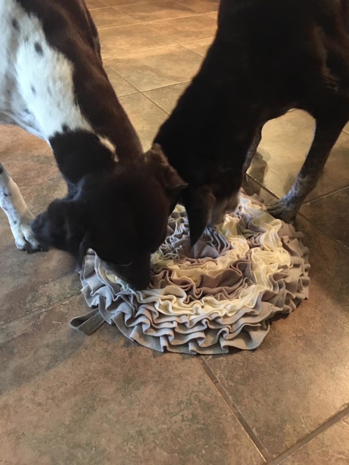 Reviewer's dog sniffing the textured, ruffled mat