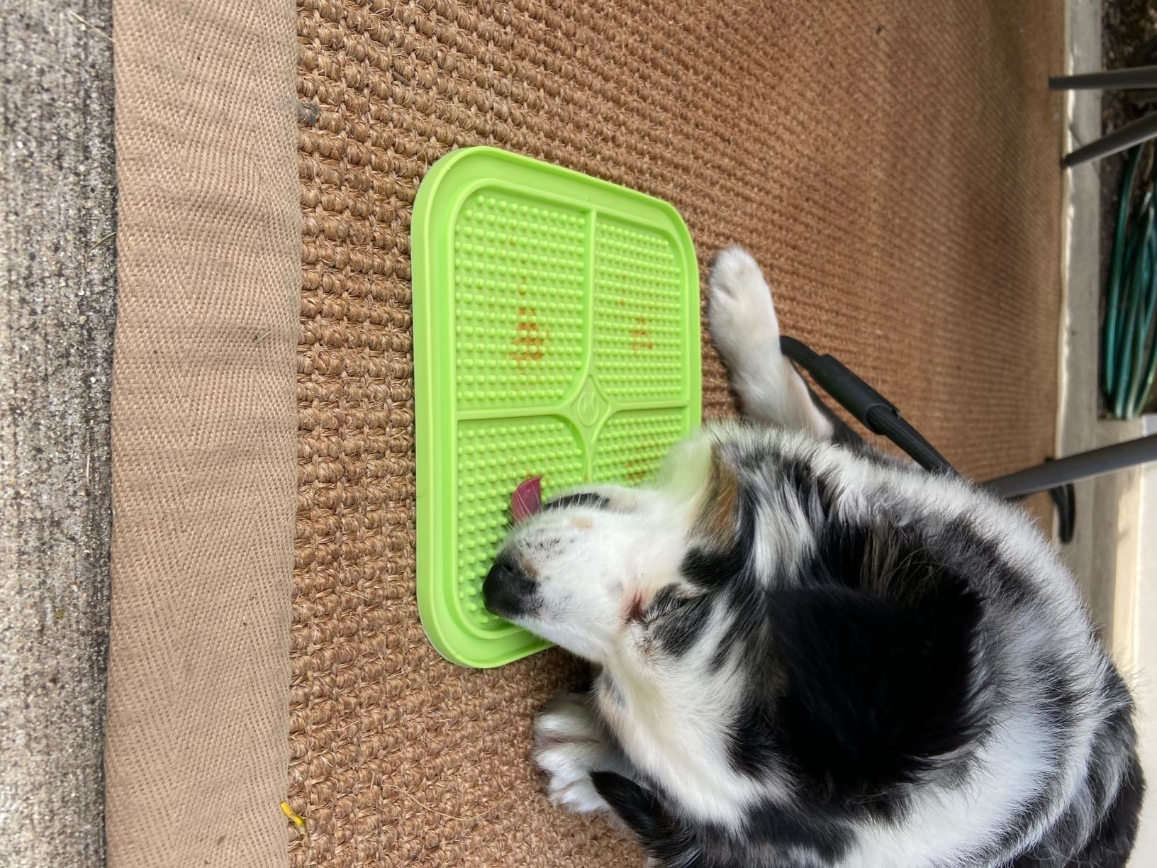 Reviewer's dog licking the peanut butter off the pad